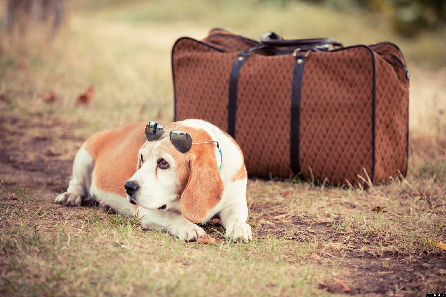 o-PET-TRAVEL-facebook