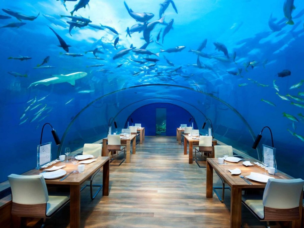 eat-in-a-real-life-aquarium-at-the-underwater-restaurant-inside-the-conrad-maldives-rangali-island-hotel