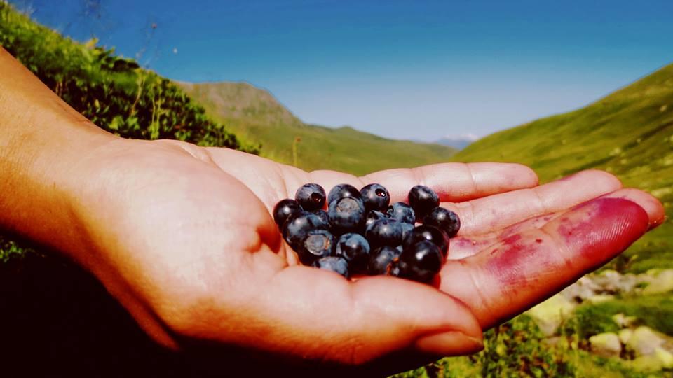 Mountain cranberries
